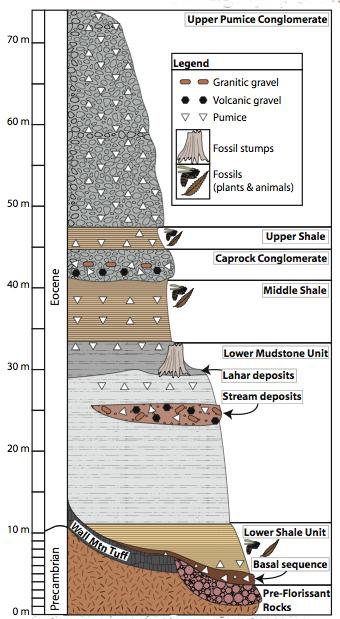 Geologyfossils